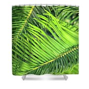 Palms In Light And Shadow Shower Curtain