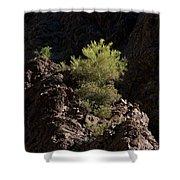 Palo Verde Spotlight-sq Shower Curtain