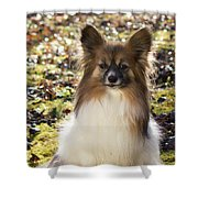 Papillon Sitting In Leaves Shower Curtain