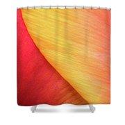 Pastel Curve  Shower Curtain