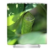 Patience Of Hope Shower Curtain