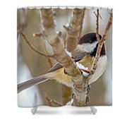 Peaceful Winter Chickadee  Shower Curtain