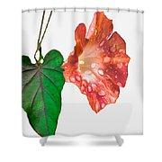 Peach Morning Glory Shower Curtain