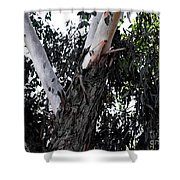 Pealing Back Shower Curtain