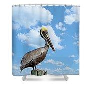 Pelican At The Beach Shower Curtain by Kim Hojnacki