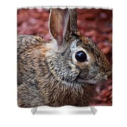 Peter Rabbit Two Shower Curtain