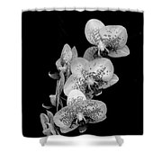 Phalaenopsis Orchids Black And White Shower Curtain