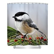 Pine Chickadee Shower Curtain