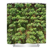 Pine Rows Aerial 2x1 Shower Curtain