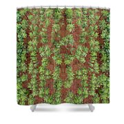 Pine Rows Aerial Shower Curtain