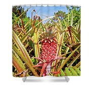 Pineapple Plant Ananas Pico Island Azores Portugal Shower Curtain