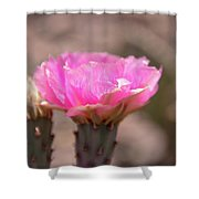 Pink Cactus Bloom Shower Curtain
