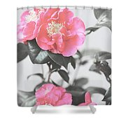 Pink Camellia. Shabby Chic Collection Shower Curtain