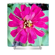 Pink Zinnia With Spider Shower Curtain