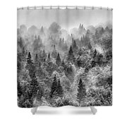Pinsapos Into The Woods. Bw. Foggy Sunrise Shower Curtain