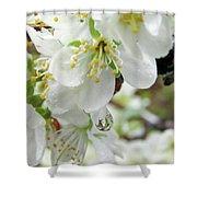 Plum Blossoms 2 Shower Curtain