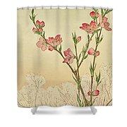 Plum Or Cherry Blossom Shower Curtain