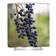 Pokeberries Shower Curtain
