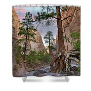 Ponderosa Pines In Slot Canyon Shower Curtain