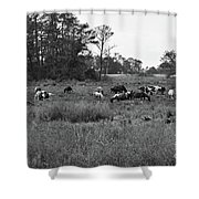Pony Herd Bnw Shower Curtain