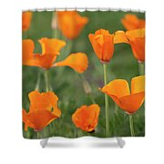 Poppies In The Breeze Shower Curtain