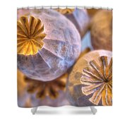 Poppy Seed Pods 2 Shower Curtain
