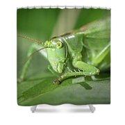 Portrait Of A Great Green Bush-cricket Sitting On A Leaf Shower Curtain