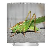 Portrait Of A Great Green Bush-cricket Sitting On The Pavement Shower Curtain