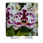 Portrait Of An Orchid Shower Curtain
