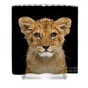 Portrait Of Little Lion Shower Curtain by Sergey Taran