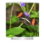 Postman Butterfly 1 Shower Curtain by Dawn Richards