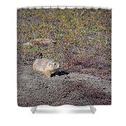 Prairie Dog 1 Shower Curtain
