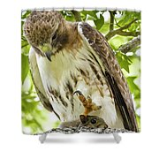 Predator With Prey Shower Curtain