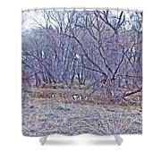 Prescott Arizona Watson Lake Bayou Trees Scrub Water Grasses 3142019 4916 Shower Curtain