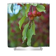 Pretty Cherries Hanging From Tree Shower Curtain