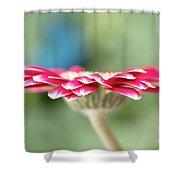 Pretty Petals Shower Curtain