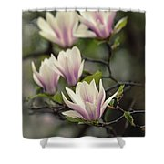 Pretty White And Pink Magnolia Shower Curtain