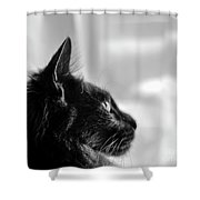 Profile Of A Long Haired Cat In Window Shower Curtain