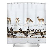 Pronghorn Antelope And Geese Shower Curtain