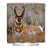 Pronghorn In The Sage Shower Curtain