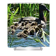 Proud Mother Duck Shower Curtain