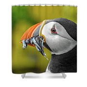Puffin With A Mouthful Shower Curtain