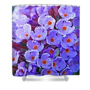 Purple Flowers In The Morning Dew Shower Curtain