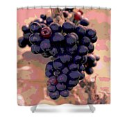 Purple Grape Bunches 18 Shower Curtain