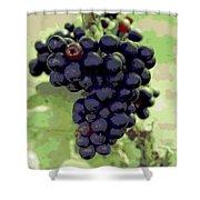 Purple Grape Bunches 19 Shower Curtain