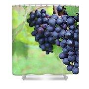 Purple Grape Bunches 21 Shower Curtain