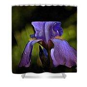 Purple Iris And Dewdrops II Shower Curtain
