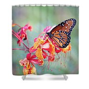 Queen Butterfly On Mexican Bird Of Paradise  Shower Curtain