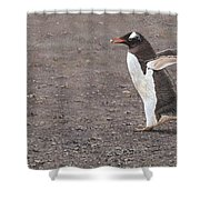 Quick Hurry - Gentoo Penguin By Alan M Hunt Shower Curtain by Alan M Hunt