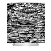 Raindrops On Wood, California, Usa Shower Curtain